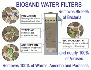 Organisms&BSF